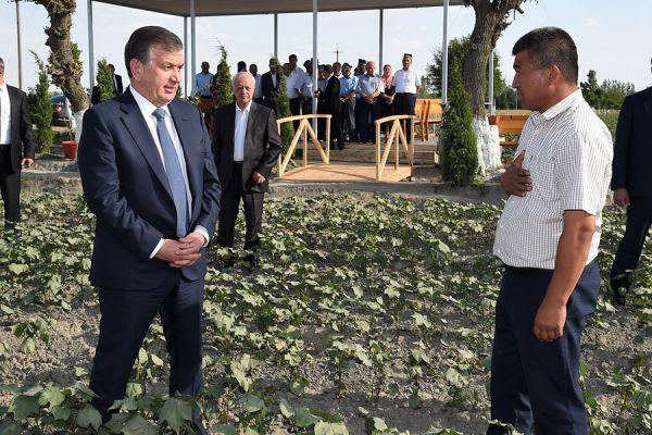 В Узбекистане осудили 155 фермеров за невыполнение плана по сдаче хлопка
