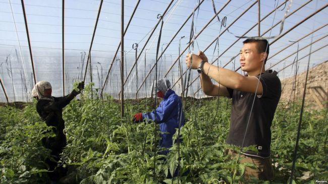 В Таджикистане сдали 18 тыс. га земли в аренду компаниям из Китая